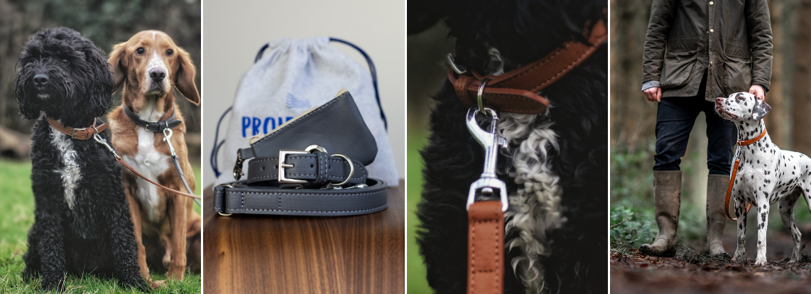 Sustainable Pet Accessories